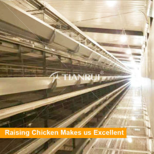 Tianrui H type 5 tiers poultry farming equipment for laying hens pictures & photos