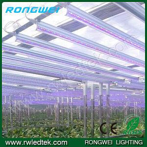 IP68 650-660nm 2.4m 36W LED Growing Lights