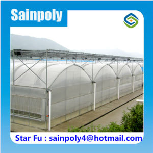 Multi-Span Plastic Film Greenhouse for Strawberry Growing pictures & photos