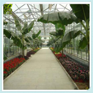 Professional Multi-Span Hydroponic Green House pictures & photos