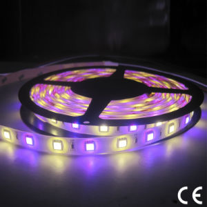 SMD5050 3528 Double-Row RGBW 24V LED Flexible Light Strip pictures & photos