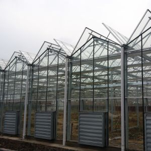 Venlo Glass Greenhouse Fv96g40 pictures & photos