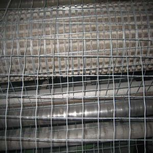 Cold/Hot Dipped Galvanized Welded Wire Mesh