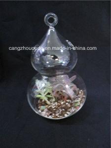 Plant Glass Flower Vase pictures & photos