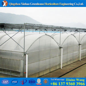 Promotion Manafacturer Specialized in Hydroponic System Plastic Film Greenhouse pictures & photos