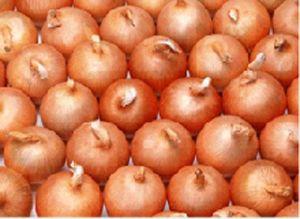 Onion (13)
