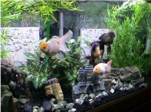 Aquarium Light 40W