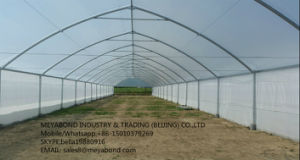 Agriculture HDPE Anti Insect Net pictures & photos