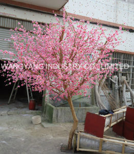 Factory Sale Nature Wood Trunk Cherry Blossom Tree pictures & photos