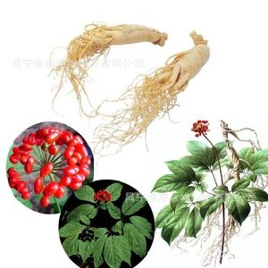 Factory Supply High Quality Ginseng Leaf Extract Ginsenoside 10% pictures & photos