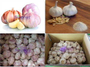 The Normal White Garlic with 4.5cm, 5.0cm, 6.0cm pictures & photos