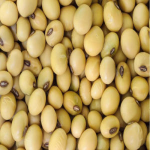 Non-GMO Soy Fiber for Best Price pictures & photos