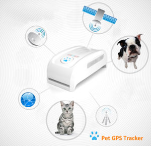 Mini Long Standby Time Dog Cat Pet Personal GPS Tracker /Ios /Andriod APP Free Website Service pictures & photos