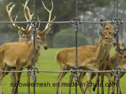 Sailin Hot-Dipped Cattle Fence Deer Fence pictures & photos