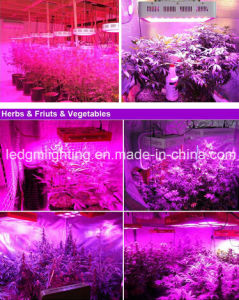 Hot Promotion! ! ! 150W 160W LED Grow Light Full Spectrum LED Plant Grow Light 72 *3watt LED Hydroponic Grow Light From China pictures & photos
