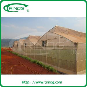 Tropical Insect Net Greenhouse for Vegetables growing pictures & photos