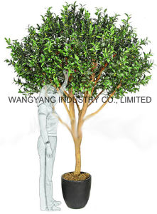 Factory Hot Sale Decoration Artificial Fake Synthetic Olive Tree pictures & photos