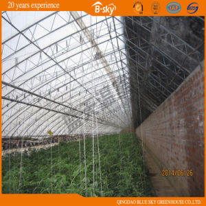 Traditional Chinese Solar Greenhouse for Planting pictures & photos