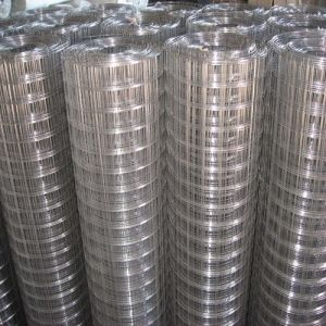Galvanized/PVC Coated Welded Wire Mesh pictures & photos