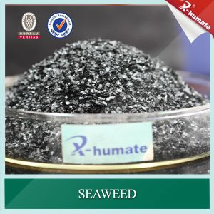 Seaweed Extract Flakes, Potassium Humate pictures & photos