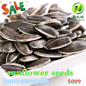 Chinese Organic Sunflower Seeds 5009