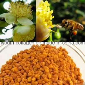 Health Food, Bee Pollen, Top Pure Tea (Green) Bee Pollen, No Antibiotics, No Pesticides, No Pathogenic Bacteria, Anticancer, Whitening, Prolong Life pictures & photos