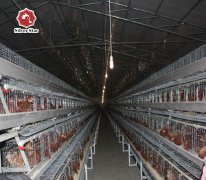 Silver Star Poultry Farm Layer Chicken Cage pictures & photos