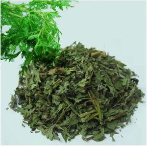 Sweet Wormwood Powder Extract with Artemisinine 99% HPLC pictures & photos