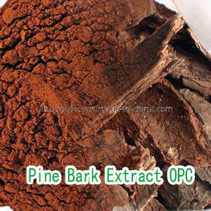 Pine Bark Extract Procyanidin 95% (OPC)