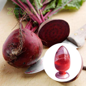 High Quality Lowest Price Beetroot Extract/Beet Powder/Fresh Beetroot pictures & photos
