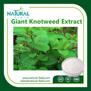 Giant Knotweed Extract Plant Extract Resveratrol Powder by HPLC pictures & photos