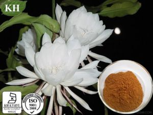 Epiphyllum Extract, Epiphyllum Flowder Extract10: 1, 20: 1 pictures & photos