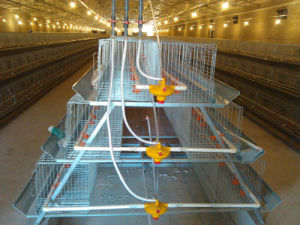 Automatic a Type or H Type Layer Cages From China pictures & photos