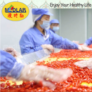 Medlar Lbp Organic Dried Goji Fruit Wholesale Goji
