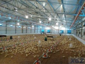 Chinese Famous Brand Steel Structure Low Cost Chicken Shed-Xgz-Gr015 pictures & photos