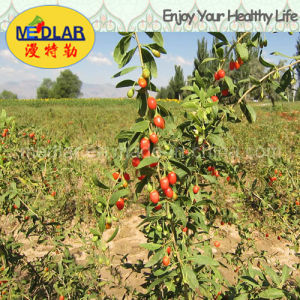 Medlar Lbp Organic Food Red Dried Goji Berry