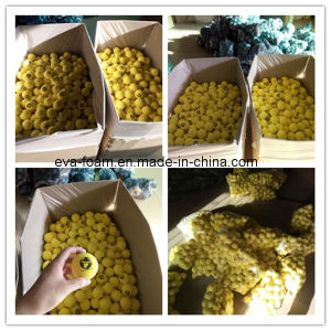 Customized RoHS Certificate Environmental Protection Material EVA Foam Massage Ball pictures & photos