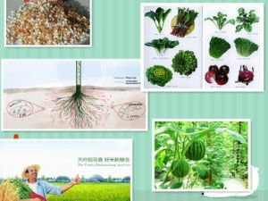 Soluble Organic Fertilizer Fulvic Acid pictures & photos
