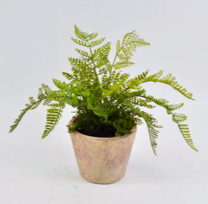 Various Green Grass in Clay Pot