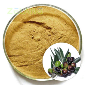 Factory Supply Natural Olive Leaf Extract 20% HPLC Hydroxytyrosol pictures & photos