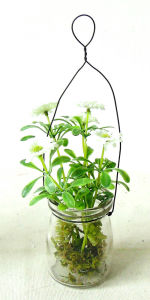 Life-Like Artificial Daisy in Glass Potting for All Public Decoration pictures & photos