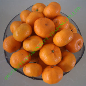Fresh Mandarin Orange (Nanfeng)
