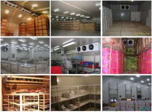 Walk in Freezer for Fish, Meat pictures & photos