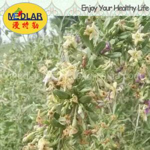 Medlar Lbp Effective Food Red Gojiberry