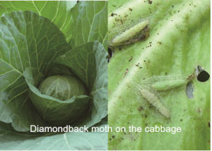 New High Efficient Biotech Insecticide Spinosad 10%Sc pictures & photos