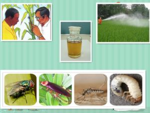 Insecticide Methomyl 90%Sp, CAS: 116752-77-5 Methomyl Agrinate pictures & photos