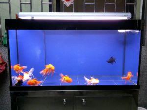 Best-Selling Rectangular Glass Aquarium Fish Tank for Home Decorative pictures & photos