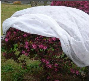 Polypropylene Spunbond Nonwoven Agriculture Plant Cover pictures & photos
