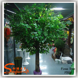 2015 Factory Wholesale Artificial Mini Ficus Banyan Trees pictures & photos