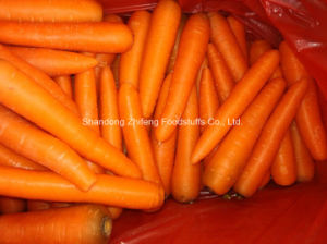 High Quality Exporting Shandong Carrot pictures & photos